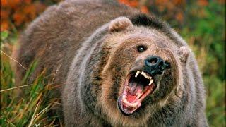Охотник и жертва.Человек и медведь.Документальный фильм.