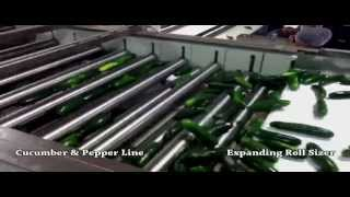 Lakewood Process Machinery Vegetable Packing Line