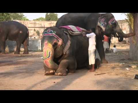 Mahouts (The elephant people)