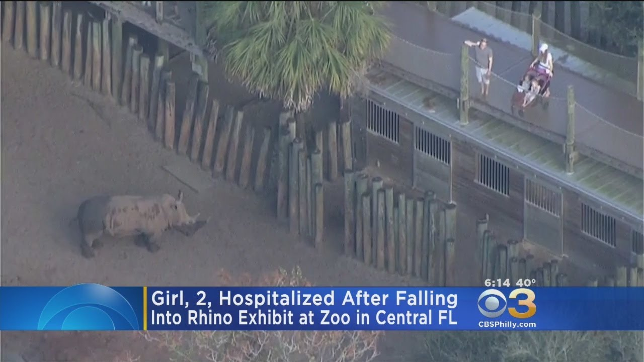 Girl, 2, Hospitalized After Falling Into Rhino Exhibit At Zoo In Central  Florida