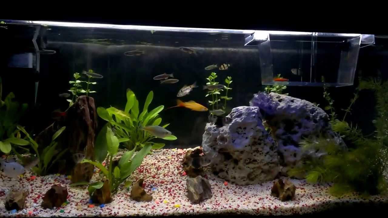 mi acuario de 90 litros youtube