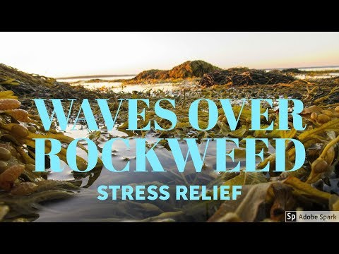 Sounds of Waves Over Rockweed