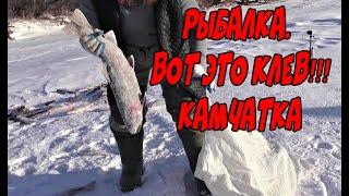 Рыбалка Камчатка Вот это клев