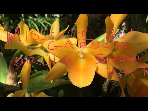 MISSOURI BOTANICAL GARDEN ORCHID SHOW FEB 2017