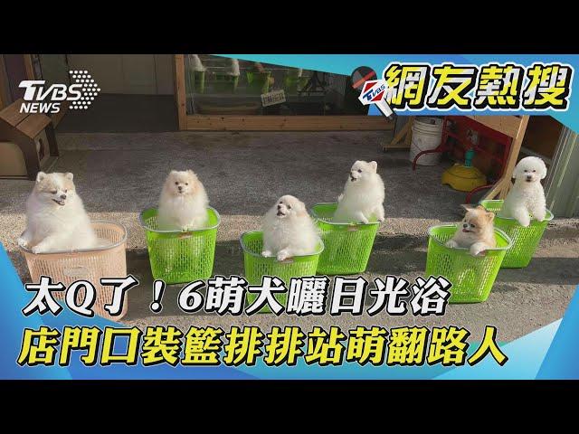 【網友熱搜】太Q了!6萌犬曬日光浴 店門口裝籃排排站萌翻路人|TVBS新聞