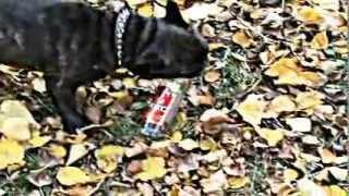 Борьба животных с алкоголем.mp4