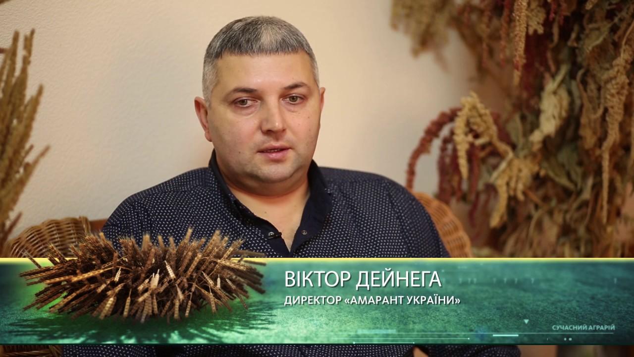 Семена амаранта от производителя амарант украины. Фото амаранта, амарантовое масло. Форум амаранта.