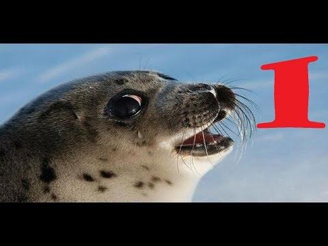 hài động vật SAM phần 1 - Chú Hải Cẩu Ngộ Nghĩnh - Nhạc Thiếu Nhi Tiếng Anh Vui Nhộn (15:46 )