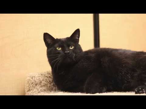 Gypsy: The cat who just wanted love
