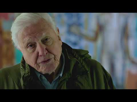 What is biodiversity? | David Attenborough: A Life On Our Planet