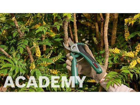 Bosch academy: Bosch EasyPrune akku-beskæresaks
