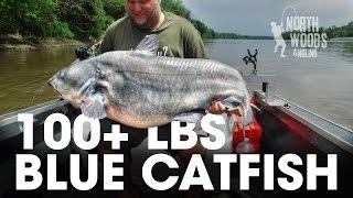100 Plus Pound Blue Catfish: Missouri River, Missouri - Northwoods Angling