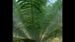 Mist Glider - Virtual Jungle