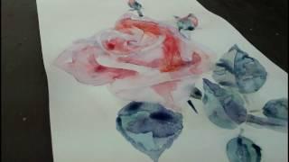 Как нарисовать розу акварелью(Видеоурок показывает процесс рисования розы акварелью., 2016-11-10T18:19:48.000Z)