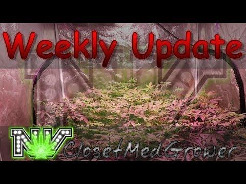 Weekly Update 9/21/2017