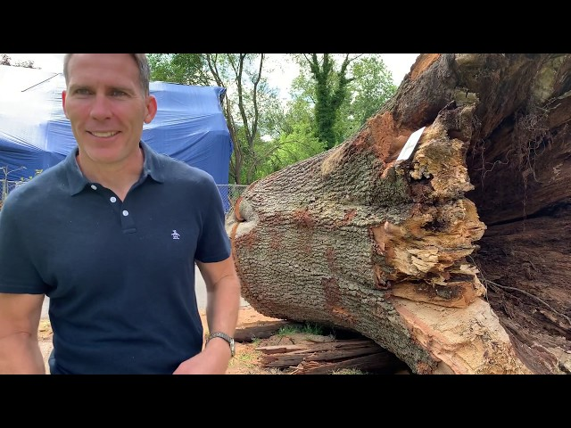 T-I-M-B-E-RRRRRRRRR!!! What to do and Who to Sue when a tree falls down.