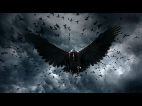 Wildlife Documentary -Crows Smarter Than You Think- Crow documentary 2016