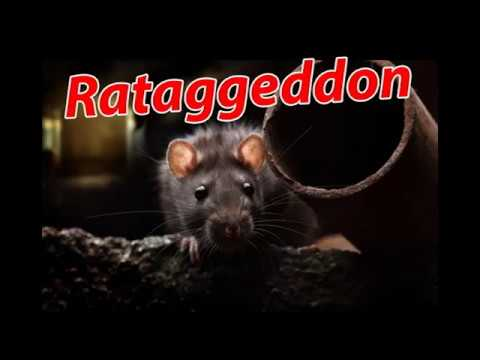 Night Vision Rataggeddon - Rat Control with the Yukon ...