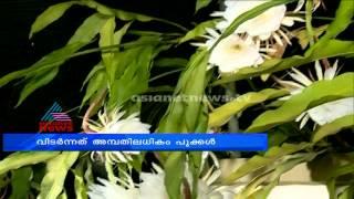 Night-Blooming Cereus Flower (Nishagandhi) Bloom in Thiruvananthapuram