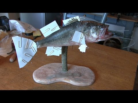 Mounting A Black Bass - Prt. 1 Of 2.