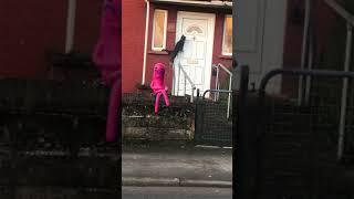 CAT knocking on door #Shorts