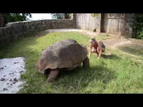 Tortue géante - Giant turtle - Madagascar - 1/2