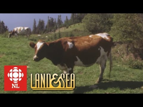 Land & Sea: Aubrey Ellsworth and his Ayrshire cows