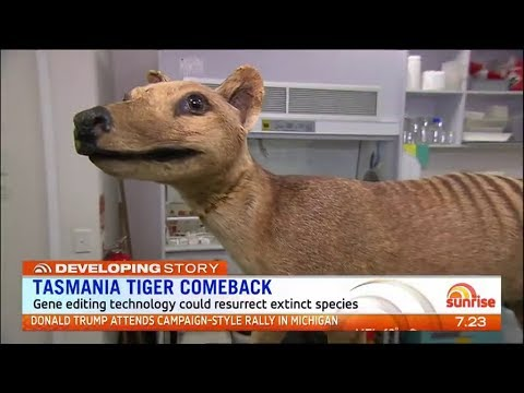 Tasmanian tiger cloning - News report