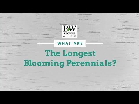 What are the Longest Blooming Perennials?