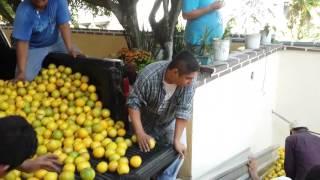 Corte de naranja jóvenes de la luz del mundo en poza rica thumbnail