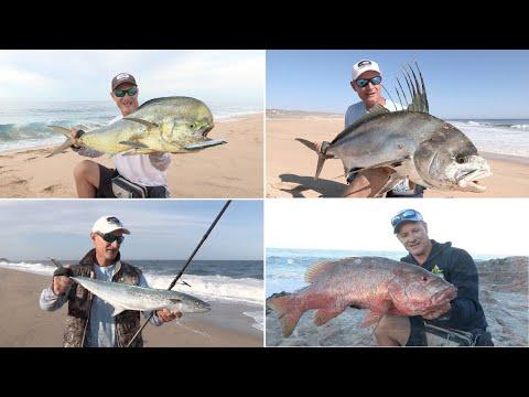 Cabo's Surf Fishing Seasons.