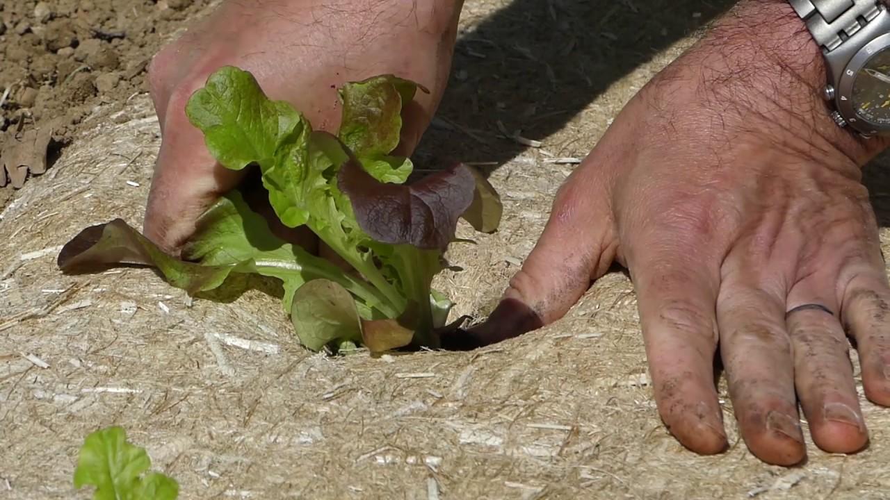 Paillage jardin potager finest paillage synthtique pour les lgumes with paillage jardin potager - Acheter de la paille pour jardin ...