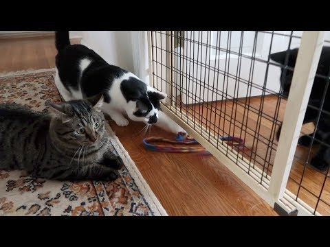 Boo Day 138 - Three Cats And The Charmer - Training And Socializing A Feral Cat