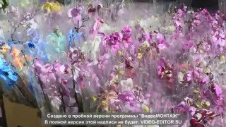 видео комнатные растения купить Киев