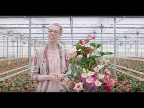a flowerful Anthurium plant arrangement | Flower Factor tutorial | Powered by Fuerte Planta