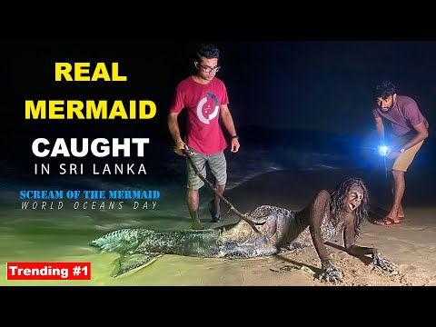 Real Mermaid caught in Sri Lanka | TRIP PISSO