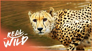 The Waterhole [Survival One Hour Documentary]   Real Wild