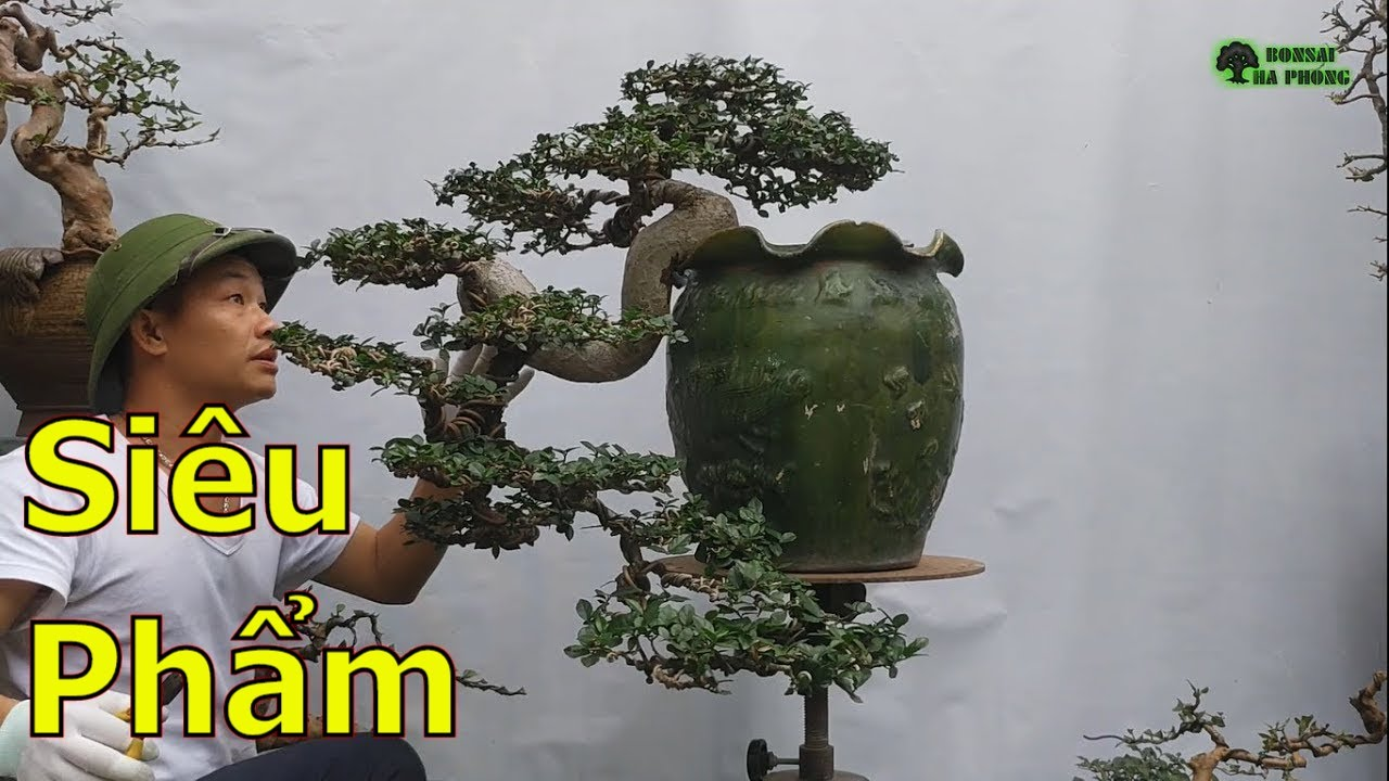 Lô cây bonsai đẹp quá các bác ạ-cây cảnh-bonsai-BShp(A Đại 0967828345)