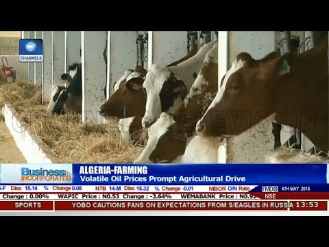 Volatile Oil Prices Prompt Agricultural Drive In Algeria |Business Incorporated|