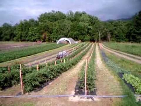 Farming in the Capital