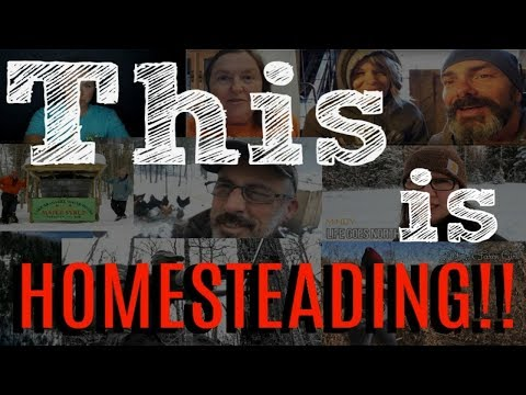 THIS is Homesteading!   Collaboration