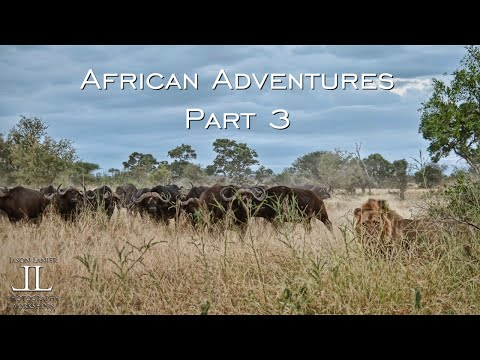 Africa Adventures Part 3- the LION HUNT, safari to Kruger National Park by Jason Lanier
