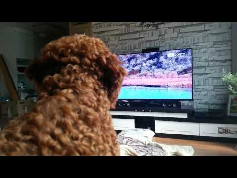 DOGTV review