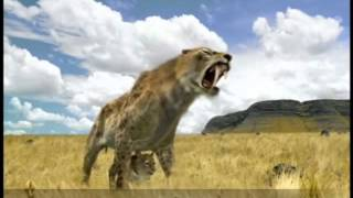 American Lion vs Sabre Toothed Cat   Who would win in a fight