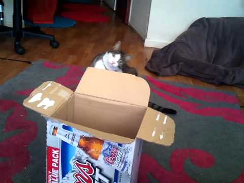 Cat Basketball blooper reel 1