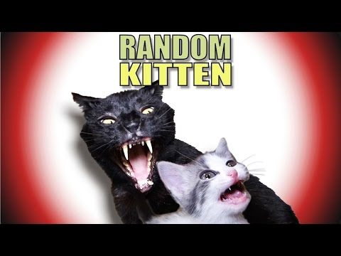 Thumbnail: Talking Kitty Cat 43 - Random Kitten
