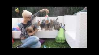 Büyük Yorkshire Terrier Ailesi :)