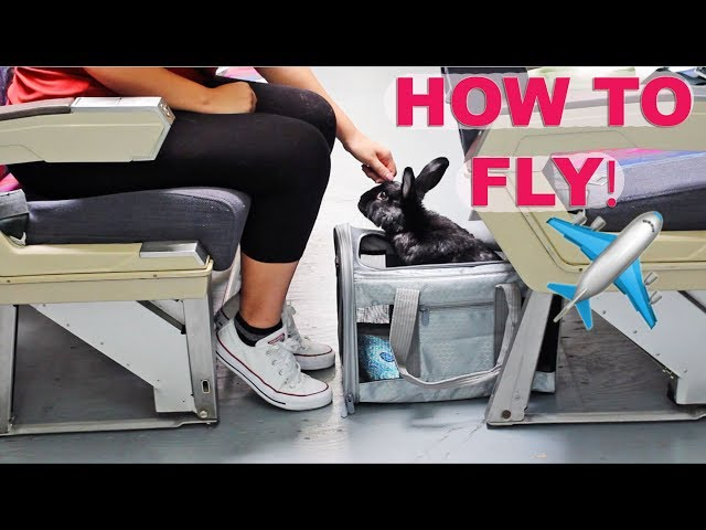 HOW TO FLY ON AN AIRPLANE WITH A RABBIT ✈️✈️✈️