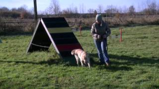 Mark Anley Dog Training Film