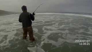pesca corvina 10k en atacama chile